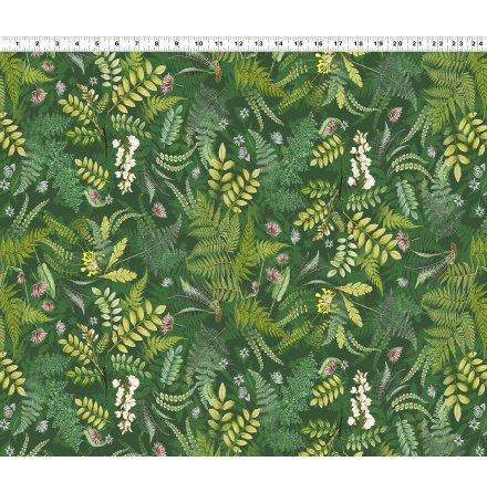 Botanical Journal Digital Ferns  Light Forest (16614)